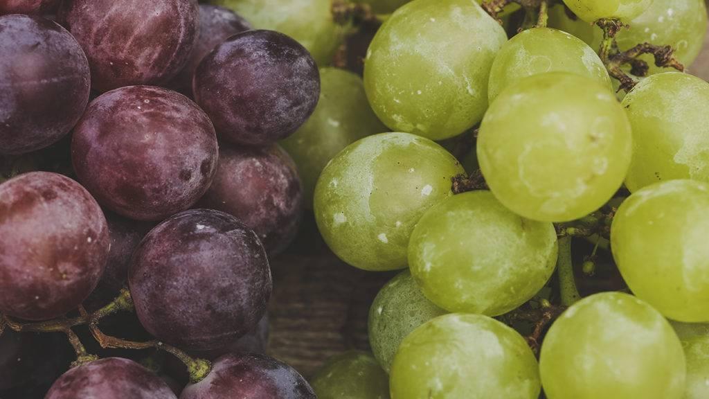 Uvas roxas e verdes frescas closup