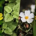 Alivia Aí: 7 ingredientes naturais recolhidos pelo mundo que acabam com a dor