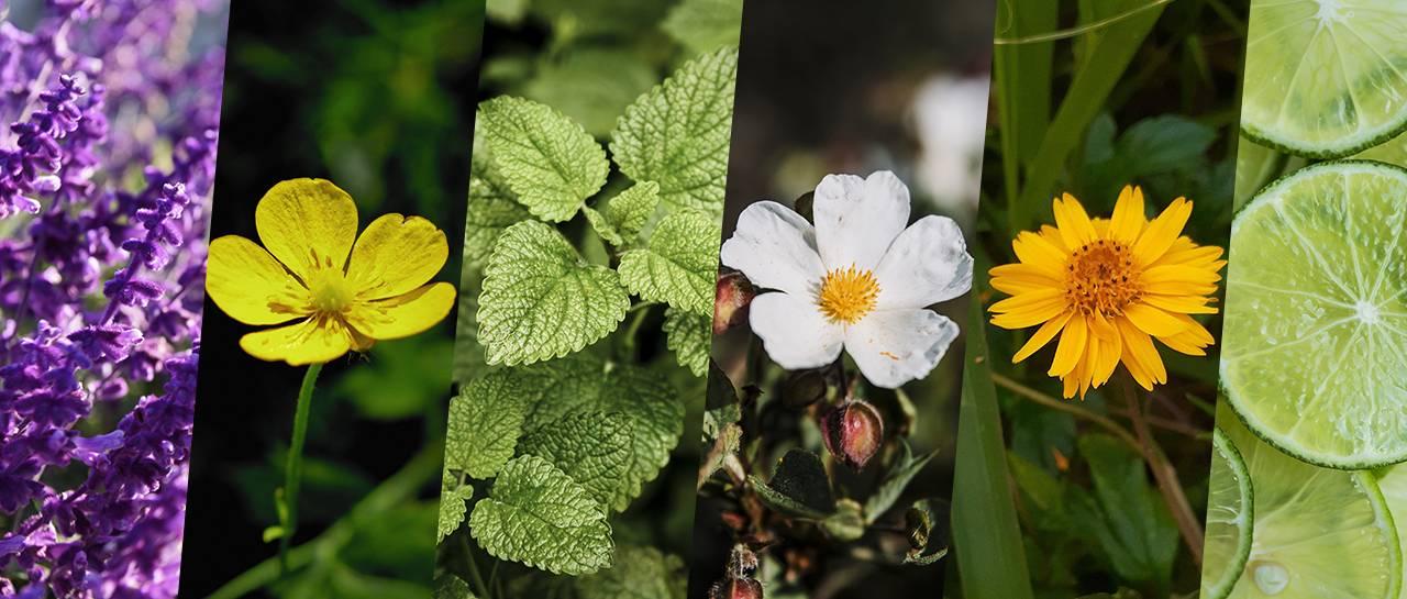 Alivia Aí: 7 ingredientes naturais pelo mundo que acabam com a dor
