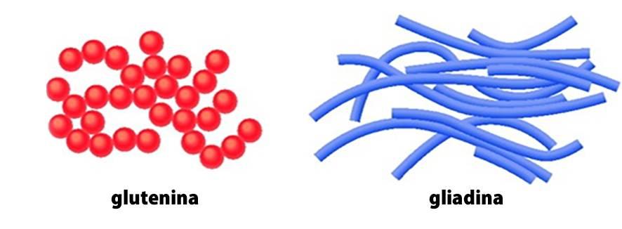 glutenina e gliadina - o que é glúten
